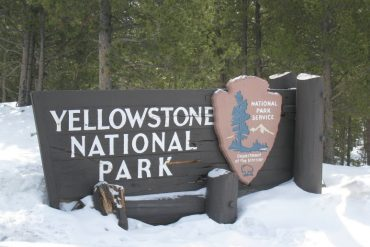 Hey Boo Boo - 12 hours in Yellowstone 9