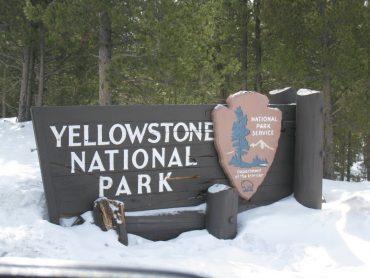 Hey Boo Boo - 12 hours in Yellowstone 9