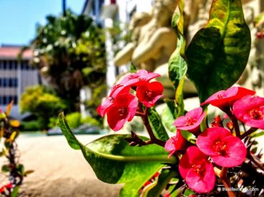 7 Reasons Why I Will Return to Santa Barbara 3