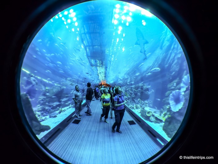 Inside the Dubai Aquarium tank