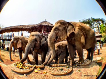 Not Riding Elephants in Thailand - A day at the Elephant Nature Park 4