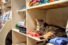 The 6-Toed Cats of The Hemingway House 5