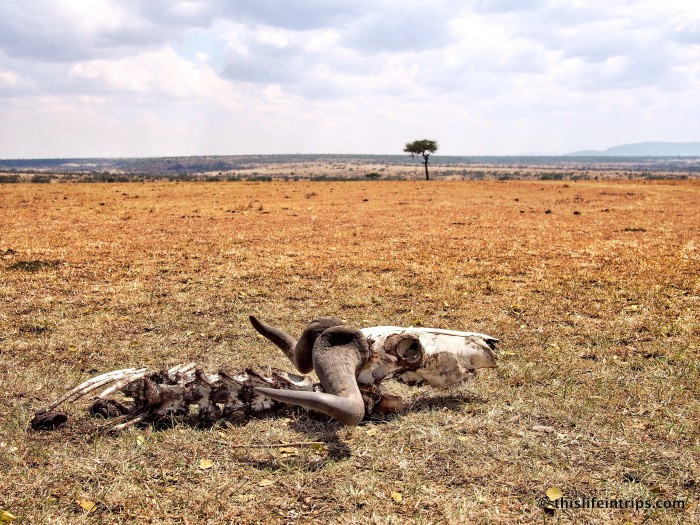 Circle of Life in Africa