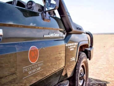 5 Reasons to Choose Encounter Mara for your Safari 6