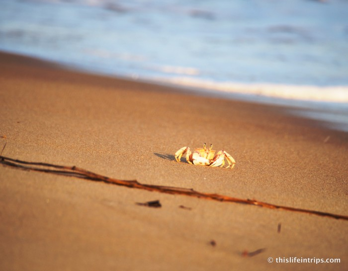 Crabs of Lamu
