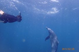 Shark Bait: Swimming with Dolphins in Lamu 12