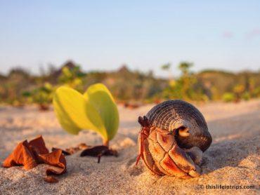 The Crabs of Lamu 2