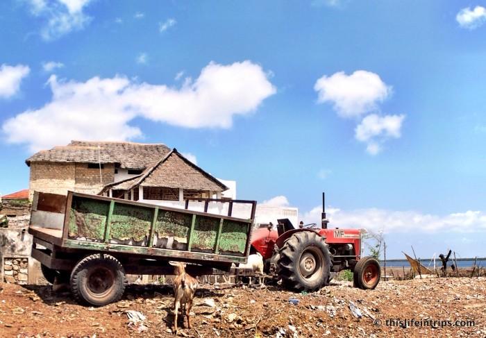 visiting Lamu Town