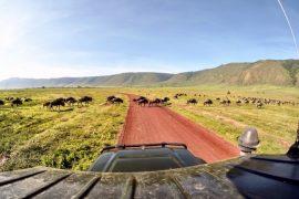 Hunting Rhino in Ngorongoro 21