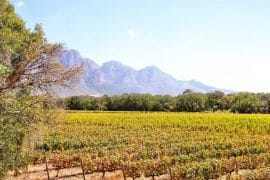 Cape Winelands Guided Tour - It's for the best. 2