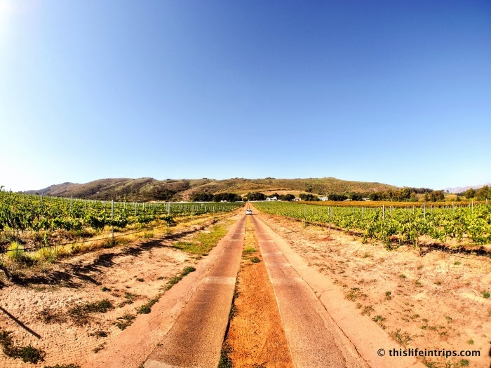 Cape Winelands Guided Tour - It's for the best. 11
