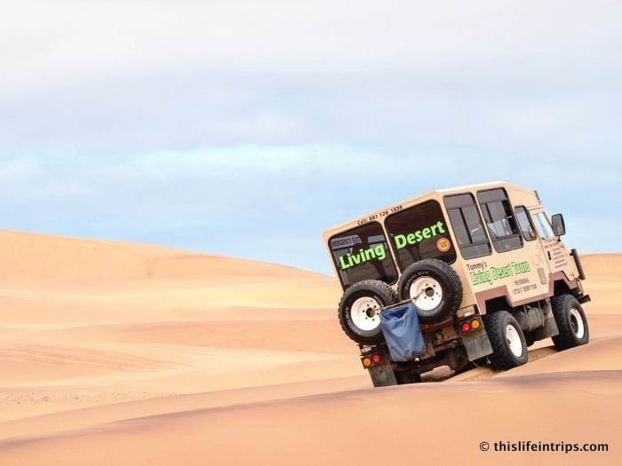 Exploring Namibia's Sandbox with Tommy's Living Desert Tours 24