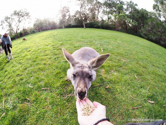 Falling in love with Adelaide and why you Shouldn't Skip it