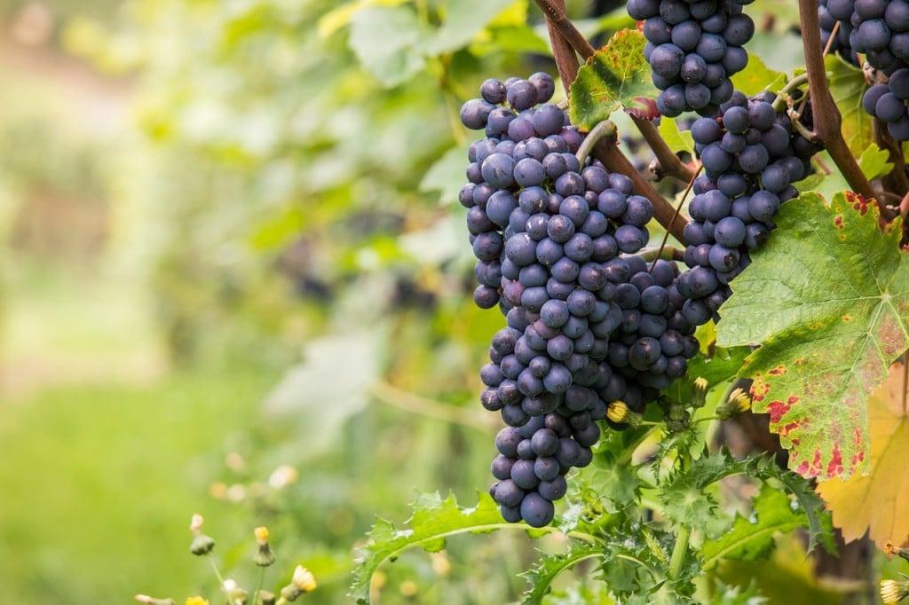 wine-980218_1280