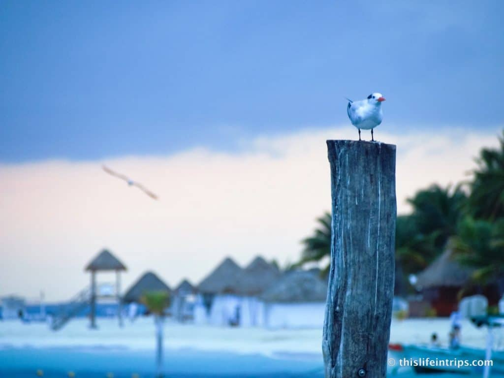 What to do on Isla Mujeres