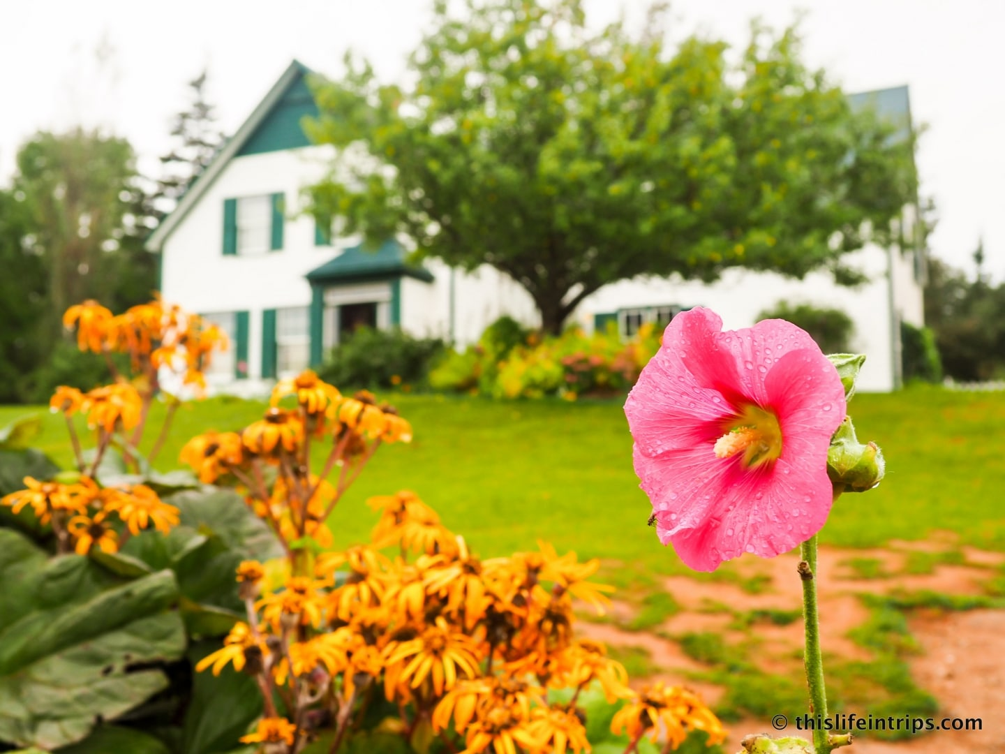 Two Days Too Little Visiting Prince Edward Island This