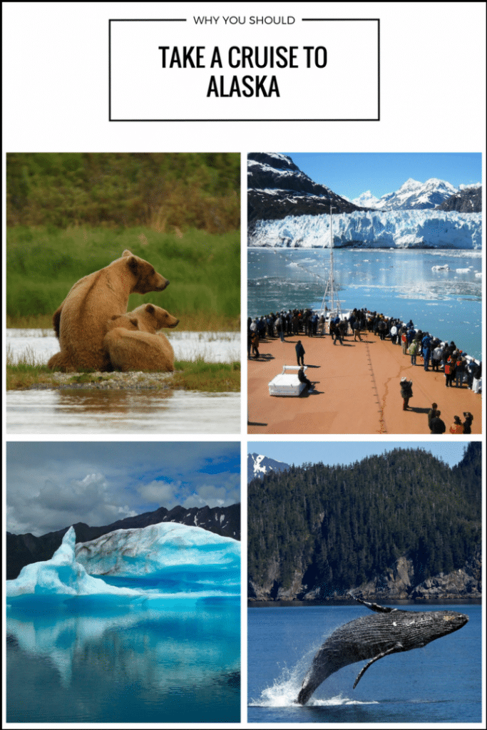 Why you Should Take a Cruise to Alaska