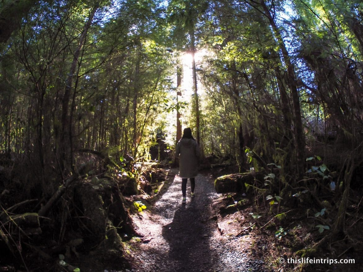 Road Tripping Around Vancouver Island's Pacific Marine Circle Route
